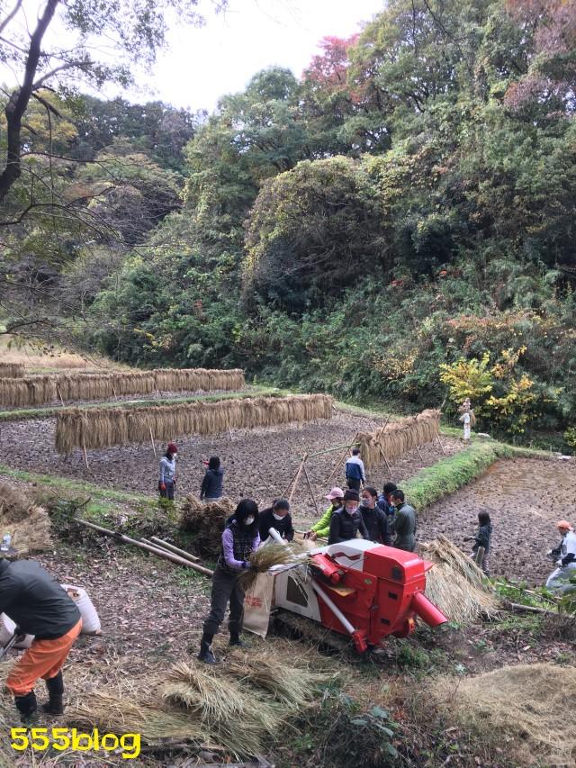 Now Tenki 農に学ぶ 谷戸田サポーター 米作り(15)脱穀 555blog 555nat ホロホロ日記