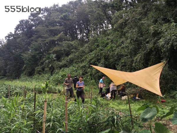 Now tenki ノーテンキ 週末シティ・ファーマー 農に学ぶ 無農薬無肥料栽培 ショウガ 自然農 Mossのテント ホロホロ日記