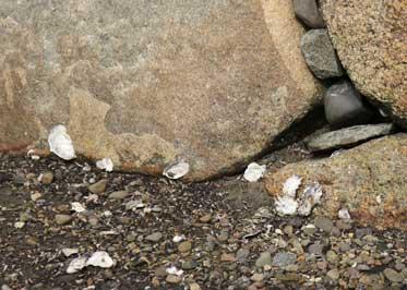 お堀の牡蠣
