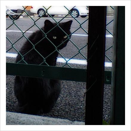 フェンス越しの黒。