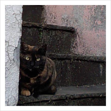 階段の猫。