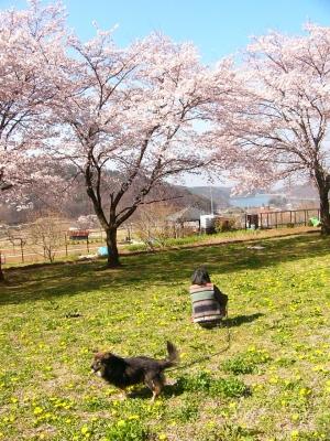 2009/4/7朝の散歩