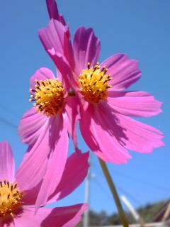 奇形の花2