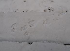 兎の足跡181224