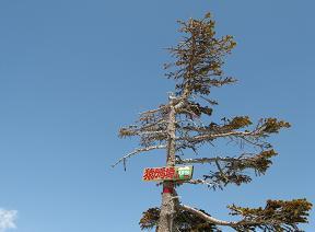 猿ヶ馬場山頂190504