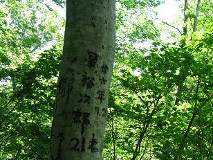 会津駒のブナ200614