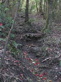 椿の登山道210411