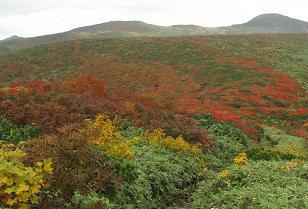 栗駒山下山道210922