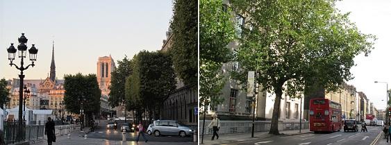 220922パリとロンドンの街路樹