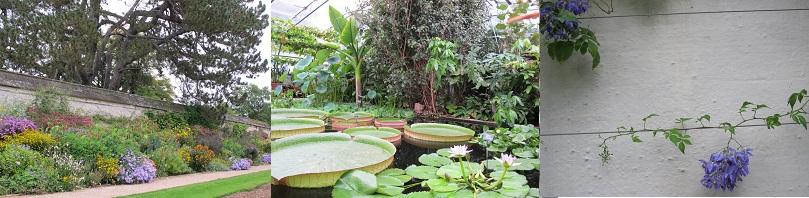 220924オックスフォード植物園