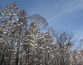221226飯綱雪景色