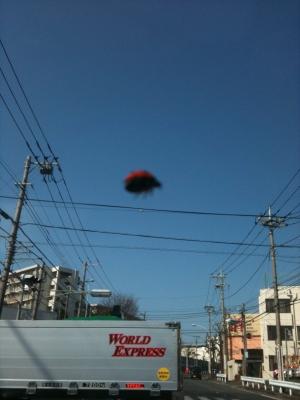 空飛ぶテントウ虫