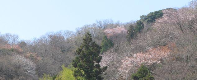 春の山はももいろだった