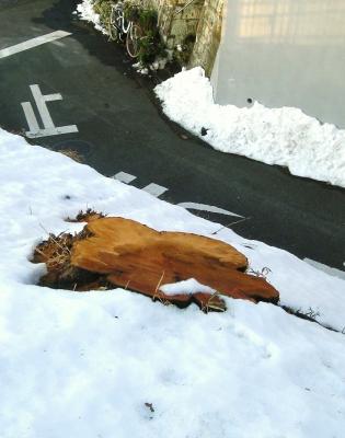 雪に埋もれてもね