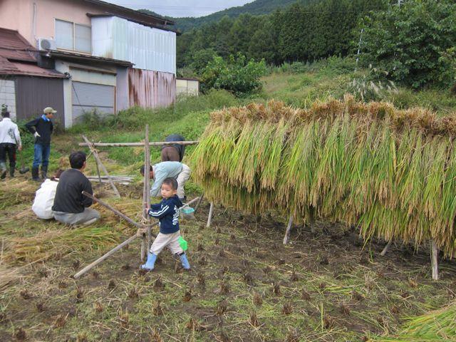 にじファーム田んぼ稲刈り18.jpg