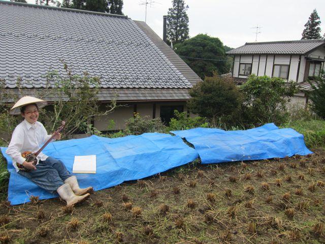 にじファーム田んぼ稲刈り21.jpg