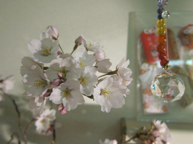 病室の桜.jpg