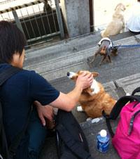 北村さんと犬