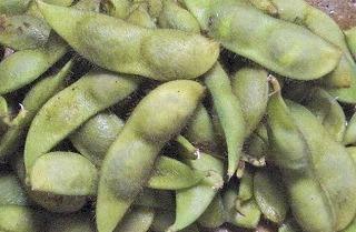 瑞穂の黒豆の枝豆