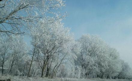 綺麗なウィーンの冬景色