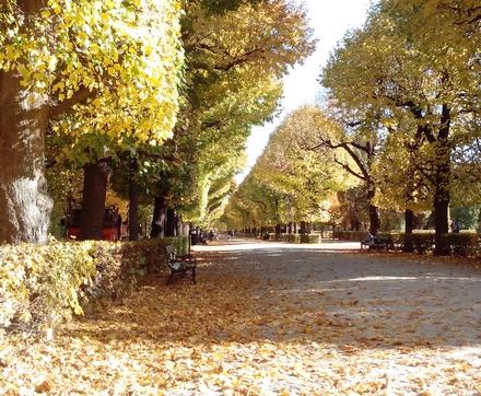 秋のシェーンブルン宮殿の庭園並木道