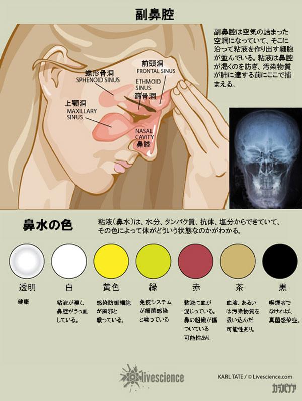色 花粉 症 鼻水