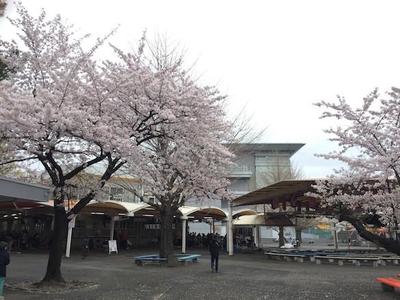 桜巡り2015 京王閣