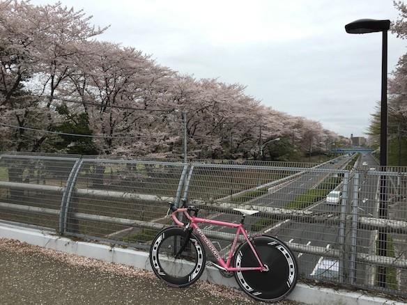 桜巡り2015