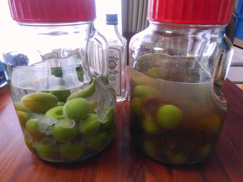 ジン梅酒と黒糖泡盛梅酒