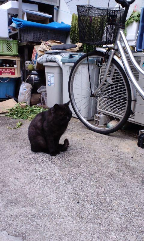 対馬で出会った黒猫くん