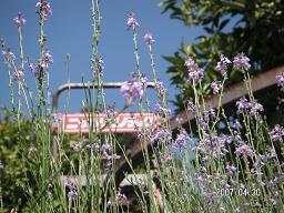 花とモノラック