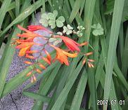 0701盆花