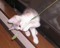 ネコじゃらしとグラ