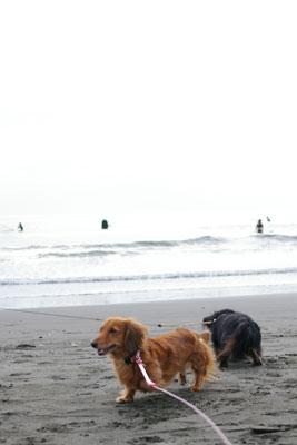 鵠沼海岸。
