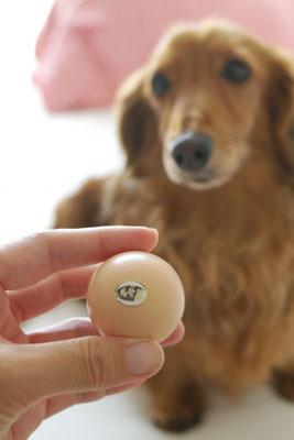 うこっけいの卵。