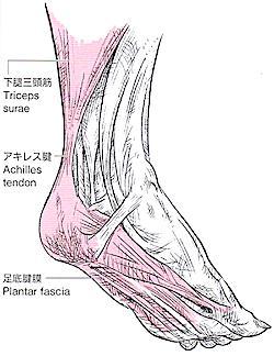 足底腱膜炎、踵 疲労感 足裏 痛み
