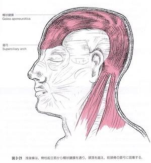 帽状腱膜 頭蓋骨 頭痛 ゆがみ