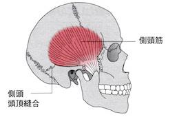 うるうカイロプラクティック院、カイロプラクティック、整体、鹿児島県、霧島市、国分、肩こり、顎関節症、アゴの痛み、クリック音、側頭筋