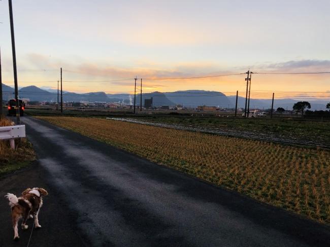 うるうカイロプラクティック、カイロプラクター、鹿児島県霧島市、キャバリア、散歩、ウォーキング、水分補給、