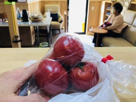 うるうカイロプラクティック、整体、霧島市、腰痛、肩こり、トマト、