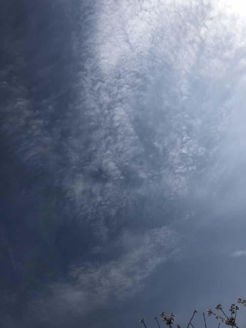 180326うろこ雲
