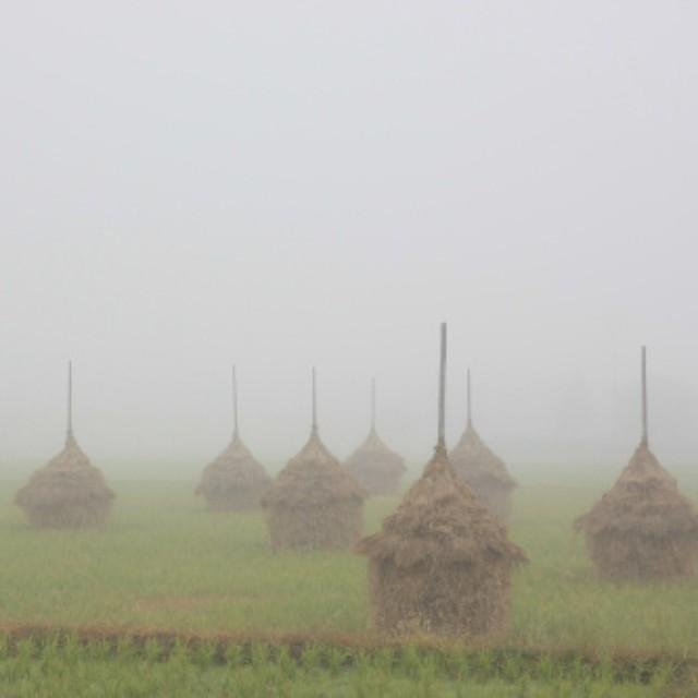 宇和町の朝霧