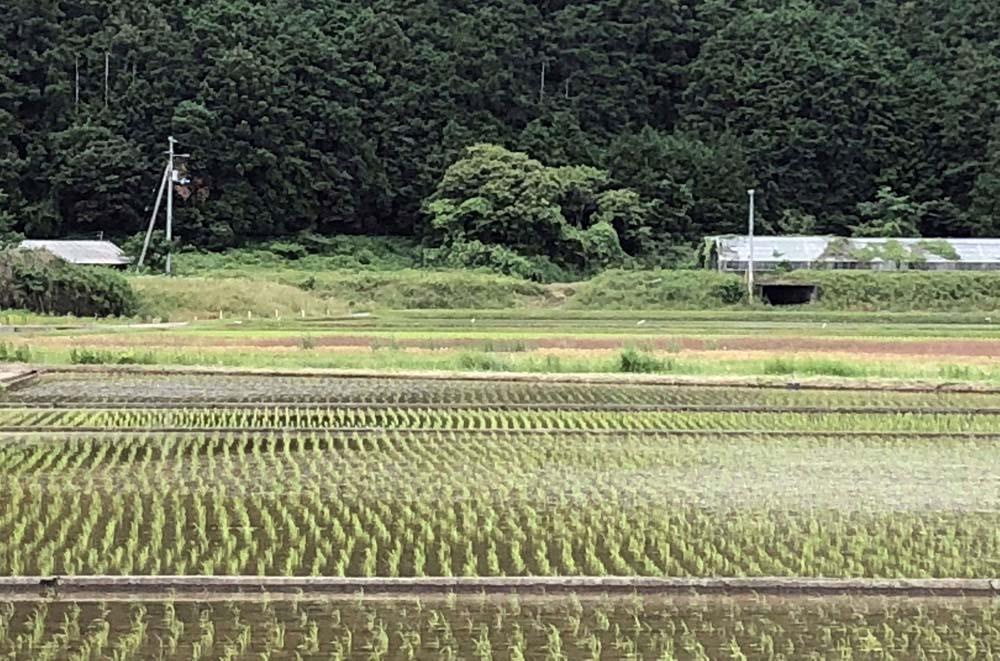 平成30年産米の田植え(宇和町)