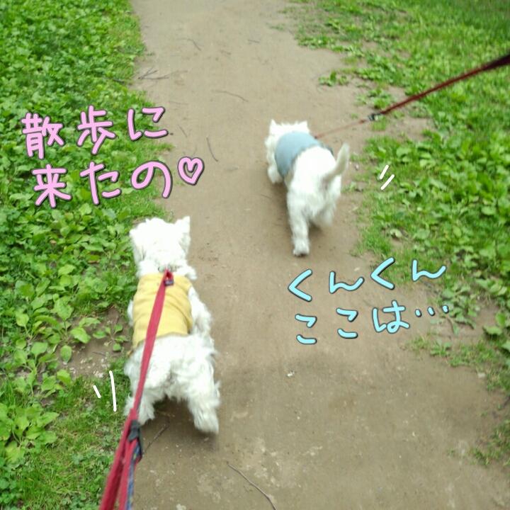 お散歩 ウキウキ♪