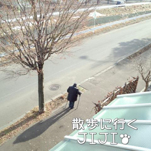 JIJIが散歩