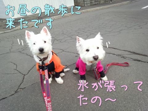 お昼の散歩