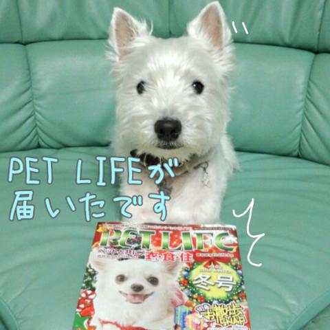 pet  life