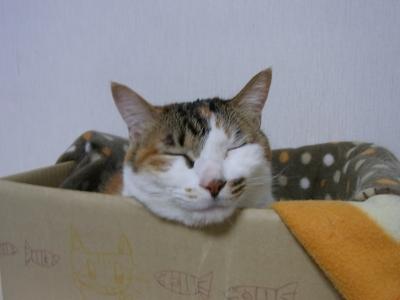 きょうの猫科