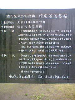 20060513_93302.jpg