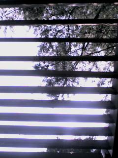 20060805_227702.jpg